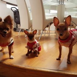 Pet_image_20170129_122708